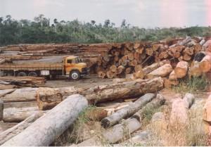 O GRANDE PROBLEMA DA DEVASTAÇÃO DA AMAZÔNIA