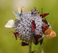 Alimentação das Borboletas e Mariposas
