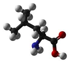 Aminoácidos não essenciais