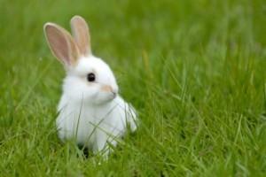 O que coelho pode comer